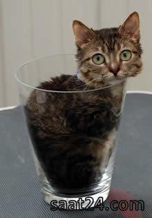 کوچکترین گربه