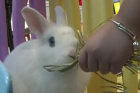 رستوران خرگوشی