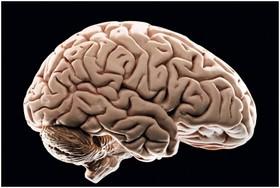حقایق جذاب و عجیب درباره مغز انسان!