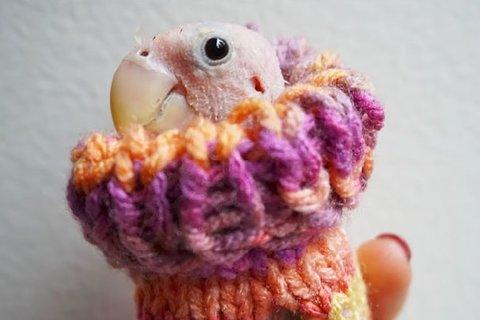 (تصاویر) لباسی گرم برای حیوانات خانگی