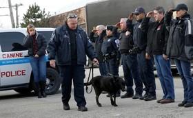 ادای احترام به سگ بمب یاب پلیس شیکاگو که به دلیل ابتلا به سرطان مغز برای کشتنش به بیمارستان برده می شود