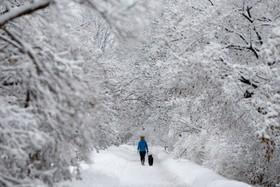 یک منظره زمستانی در اونتاریو
