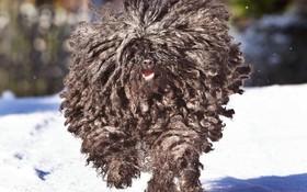 سگی با موهای عجیب در آلمان