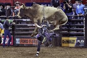 استیتسون لارنس گاو سوار درحال زمین خوردن در یک مدان گاو سواری در نیویورک آمریکا
