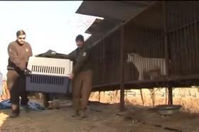 کمک به سگ ها در کره جنوبی