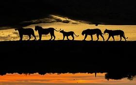 عکس منحصر به فردی از مارک مول عکاس حیات وحش که تصاویری با صبر و حوصله فراوان طی شش سال از حیات وحش می گیرد