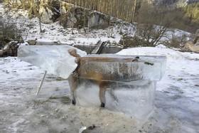 غافلگیری روباه در آلمان
