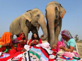 (تصاویر)لباس برای فیل ها