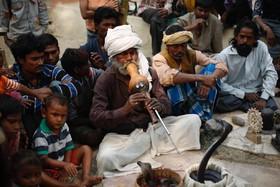 یکی از افراد نی نواز برای مار در هند از ایالت اوتارپرادش
