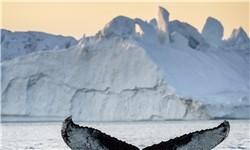 بزرگترین جزیره جهان+تصاویر