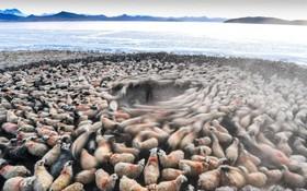 شمارش گوسفندان در روستایی در تبت در ارتفاع 5هزار متری از سطح دریا به نام دووا پیش از عبور از رودخانه یخزده پوما یامکو که کوچ نشینان ساکن در این مطقه قرن هاست به این کار اشتقال دارند