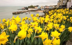 بازشدن گل ها در بخش هایی از انگلیس