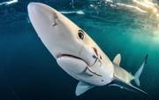 (تصاویر)عکس های برگزیده سال 2017 از موجودات اعماق دریا