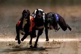 مسابقه سگ ها در استادیوم ویمبلدون در لندن