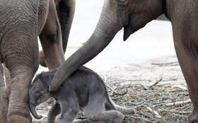 یک بچه فیلم یک روزه در کنار مادرش در باغ وحش کلن