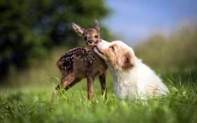 دوستی های عجیب میان حیوانات