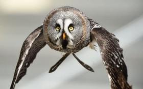 پرواز نمایشی یک جغد در یک باغ وحش در فرانسه