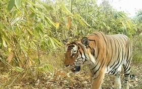با تله دوربین دار در برمه جنوب شرق آسیا از آخرین موجودات باقیمانده حیات وحش در این منقطه تصویر برداری کرده است