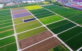 زمین های کشاورزی در یانگزو در  چین