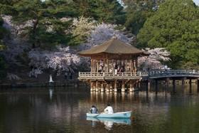 شکوفه های گیلاس در شهر نارا در ژاپن