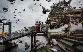 غذادادن به کبوتران در بانکوک تایلند
