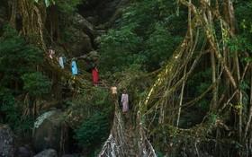 گروهی از  افراد قبیله  خاصی در آسام هند در منطقه آسام در حال عبور از یک پل که با ریشه و شاخه زنده درختان ساخته شده است