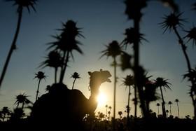 غروب آفتاب در نوار غزه