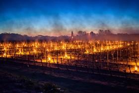 تلاش کشاورزان برای گرم کردن درخت ها و جلوگیری از سمازدگی در منطقه کشاورزی در انگلیس