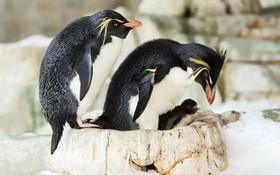 والدین پنگوئن در کنار جوجه هایشان در باغ وحشی در وین اطریش