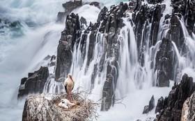 لانه لک لک در صخره ای نزدیک دریا