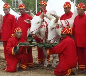 مراسم سنتی آغاز کشت برنج در تایلند