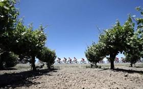 مسابقه دوچرخه سواری در کالیفرنیای آمریکا