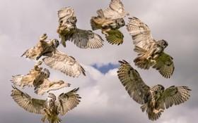 ابتکار یک عکاس از تصویر برداری از پرندگانی که پس از مدت ها نگهداری در مرکز کمک به پرندگان بی سرپرست برای نخستین بار آزاد می شوند