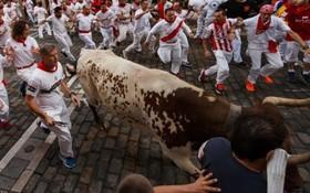 جشنواره گاو بازی در اسپانیا