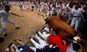 جشنواره سنت فرمین در پامپلونای استپانیا که با رها کردن گاوهای آماده شده برای گاوبازی در خیابان ها آغاز می شود