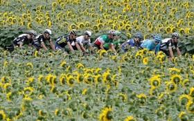 صحنه ای از مسابقات دوچرخه سواری تور دوفرانس