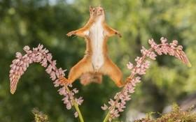 یک حرکت تعادلی از سنجاب