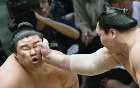 کشتی گیران سومو از ورزش های سنتی ژاپن در حال مبارزه