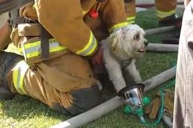نجات سگی در آتش سوزی کالیفرنیا