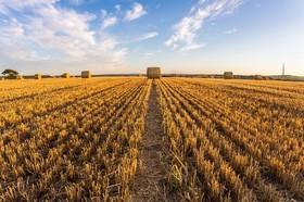 مزرعه ای در انگلیس