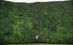 باغبانی در حال حرس سرخداری که بلند طرین سرخدار در جهان شناخته می شود در انگلیس