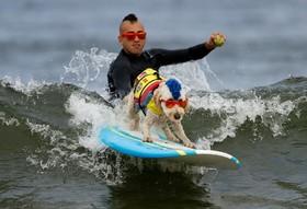 مسابقه موج سواری سگ ها در کالیفرنیای آمریکا