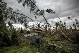 درخت های شکسته در اثر توفان در لهستان