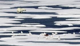 خرس قطبی در پس از خوردن غذا در حال ترک محل در تنگه فرانکلین در کانادا