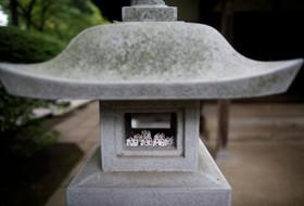 مجسمه های گربه در معبدی در توکیو که خوش یومن است
