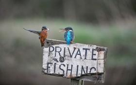 مرغان ماهیخوار روی تابلو محل شخصی ماهیگیری
