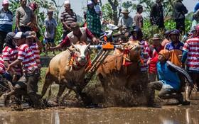 مسابقه در زمین های کشاورزی در اندونزی