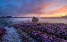 مزرعه ای در صبح زود در انگلیس