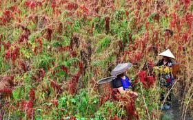 کشاورزان در حال کار در چین