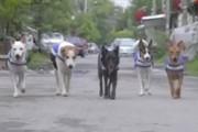 سگ های نگهبان کمک پلیس برای امنیت در تایلند